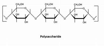 Carbohydrate Carbohydrates Polymer Polymers Polysaccharides Molecules Macromolecules