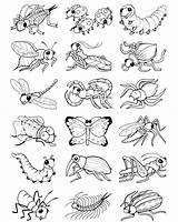 Coloring Bugs Pages Stickers Bug Insect Dover Own Publications Welcome Doverpublications Insects Colouring Spring Cute Preschool Drawings Crafts Animal Adult sketch template