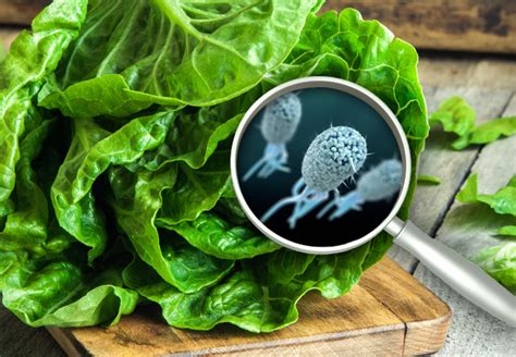Here's Why The Latest E. Coli Outbreak Affecting Romaine