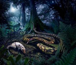 What did the first snakes look like? -- ScienceDaily