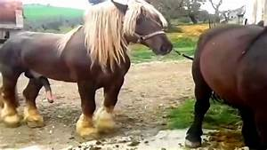 Youtube Donkey Breeding Mare Related Keywords - Youtube ...
