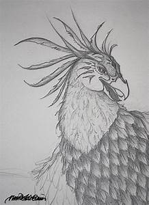 Phoenix Bird Head Drawings | www.imgkid.com - The Image ...