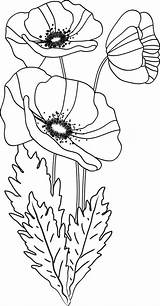 Poppy Coloring sketch template