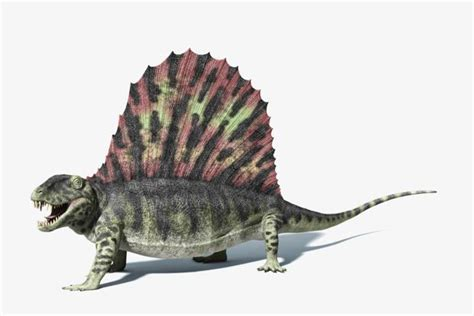 Dimetrodon More Closely Related To Mammals Than To