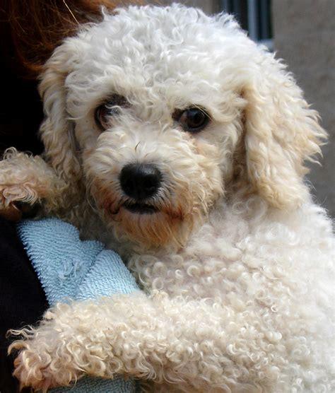 sponsor  puppy haven kennel dogs   wisconsin