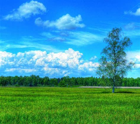 wallpaper pemandangan padang rumput stok wallpaper