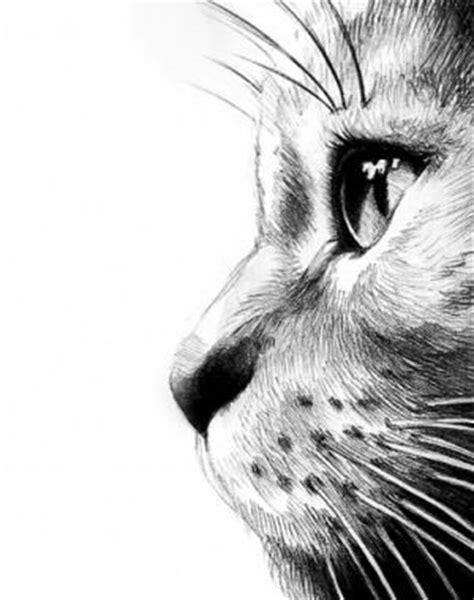Best 25+ Cat Drawing Ideas On Pinterest  Simple Cat