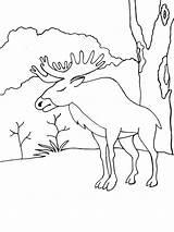 Elk Coloring Ausmalbilder Elch Animals Malvorlagen Ausdrucken Kostenlos Zum sketch template