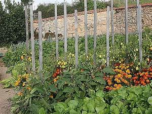 Plantes Amies Et Ennemies Au Potager : comment associer les cultures au potager ~ Melissatoandfro.com Idées de Décoration