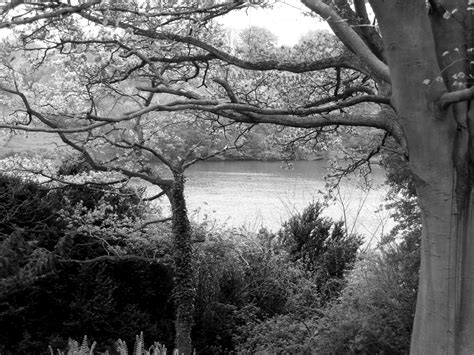 20 Beautiful Black And White Nature Photography