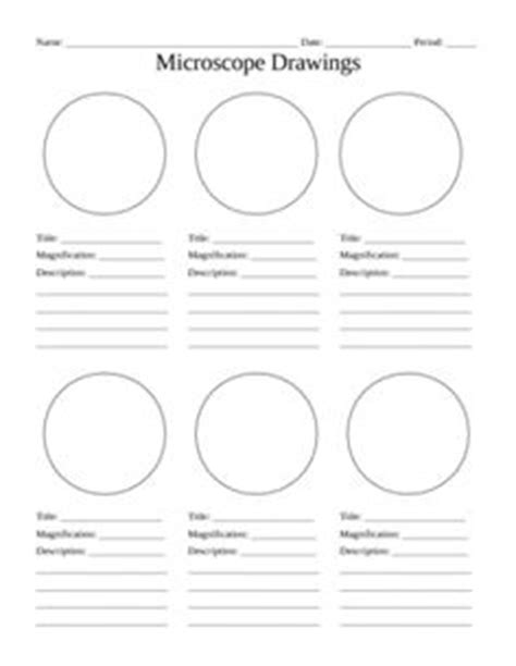 16 Best Images Of Lab Template Worksheet  Science Lab Report Template, Blank Flow Chart