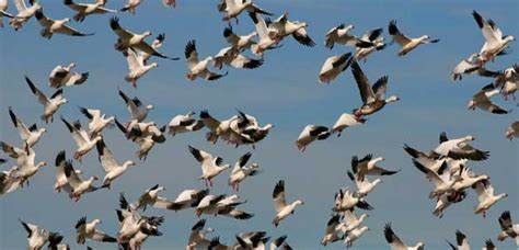 high hopes for meeting on migratory species birdlife
