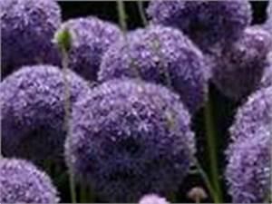 Blumenübertöpfe Für Draußen : richtige zimmerpflanzen pflege und sch ne blumendekos selber machen ~ Sanjose-hotels-ca.com Haus und Dekorationen