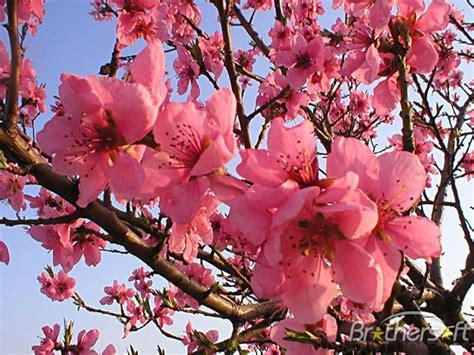 Download Free Free Blooming Spring Screensaver, Free