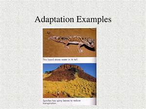 Adaptation Related Keywords - Adaptation Long Tail ...