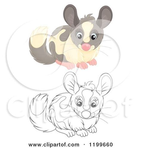 clipart   cute gray chinchilla royalty  vector