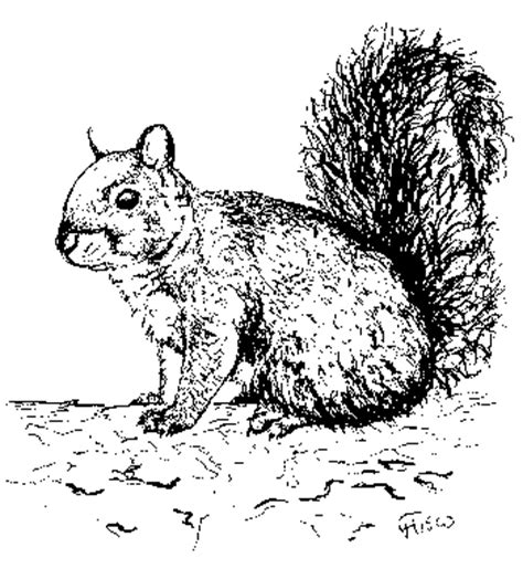 deep gray squirrel fact sheet