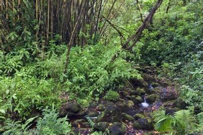 Common Plants  Tropical Rain