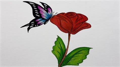 Drawing A Butterfly -how To Draw A Butterfly On A Flower