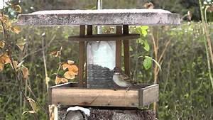 Vogelfutterspender Selber Bauen : sperling kohlmeise und blaumeise im selbst gebauten futterhaus f r v gel ~ Whattoseeinmadrid.com Haus und Dekorationen