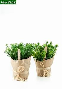 Italienische Deko Ideen : die besten 25 jasmin pflanze ideen auf pinterest jasmin ~ Lizthompson.info Haus und Dekorationen