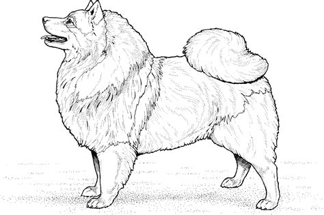 dog coloring pages coloringsuitecom