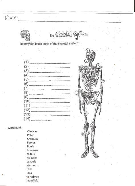 worksheet skeletal system worksheets grass fedjp
