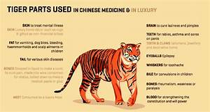 How Tiger Body Parts Are Used For In Traditional Chinese