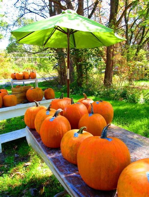 17 best images about church pumpkin sale on pumpkins pumpkin decorating and pumpkin