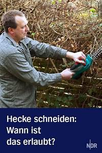 Wann Darf Ich Hecke Schneiden : gesetz wann darf ich meine hecke schneiden hecke schneiden zierpflanzen und beschnitten ~ Watch28wear.com Haus und Dekorationen