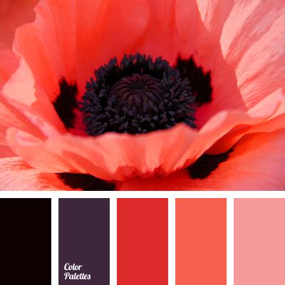 coral stranitsa  iz  color palette ideas