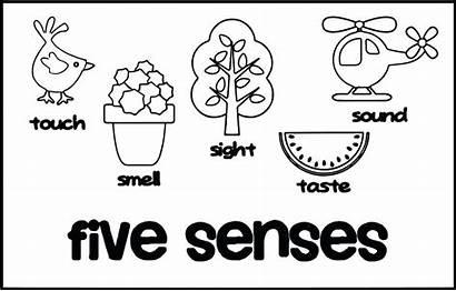 Senses Coloring Pages Five Taste Clipart Printable
