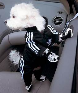 Adidas Track Suit For Your Pooch | That New Cool