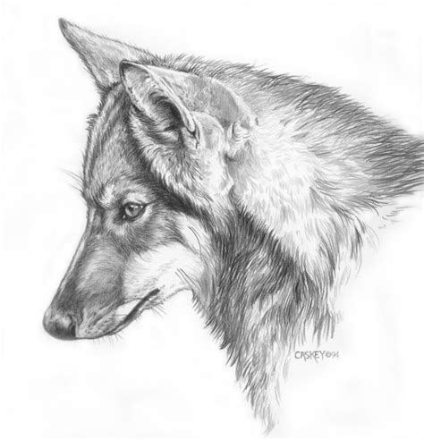 young wolf drawing wolf drawing easy anime wolf