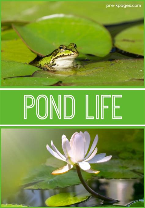 pond theme activities pre  pages