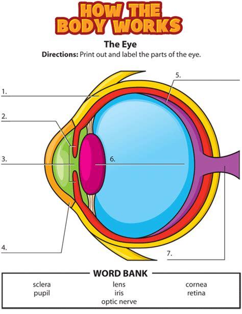 Label Eye Diagram Ks2 by Activity