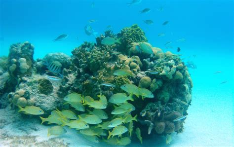 The State Of Coral Reefs In The Bahamas