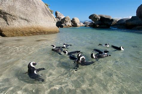 Experience South Africa Africa Singles Holidays
