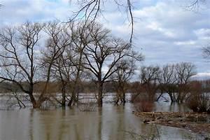 Baum Am Wasser : 0020 hochwasser baum im wasser 20110116 rhein trainer ~ A.2002-acura-tl-radio.info Haus und Dekorationen