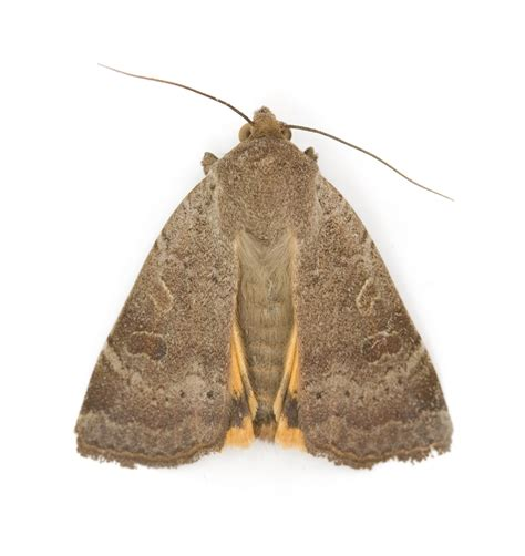 carpet for house moth treatment removal and repair service