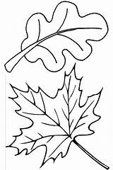 Leaves Coloring Pages Leaf Fall Autumn Oak Thanksgiving Maple Template Drawing Draw Clip Printable Clipart Sheet Colouring Sheets Getdrawings Kidsplaycolor sketch template