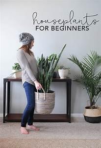 Houseplants For Beginners  How To Keep Houseplants Alive