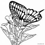 Butterfly Coloring Pages Printable Cool2bkids Butterflies Clipartmag Cycle Drawing sketch template
