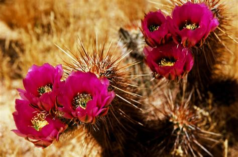 succulent plant symbolism cactus flower meaning flowers ideas for review