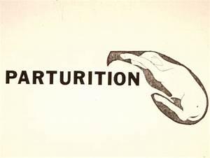 Parturition Images