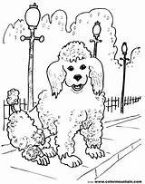 Poodle Coloring French Pages Dog Drawing Line Sheet Dogs Pretty Template Getdrawings Drawings Skirt Sketch Paintingvalley sketch template