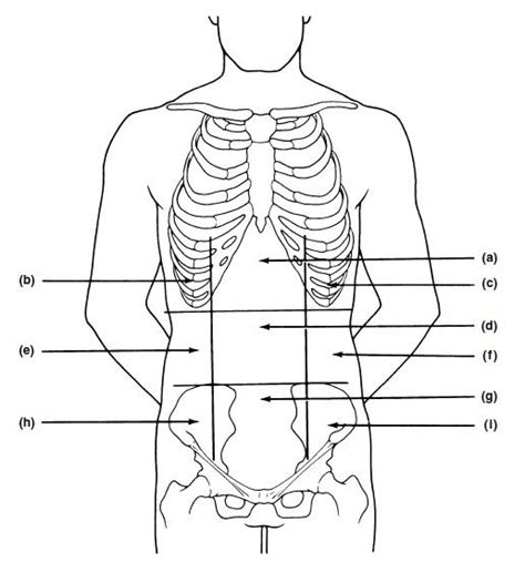 Abdominal Diagram Blank by Exercise 1 The Language Of Anatomy Flashcards Easy