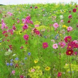 Graines Fleurs Des Champs : jach re fleurie belles des champs fleurs fleurs jardins et graines de fleurs ~ Melissatoandfro.com Idées de Décoration