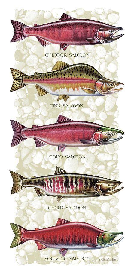 salmon species  jq licensing salmon species