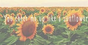 sunflower gif | Tumblr